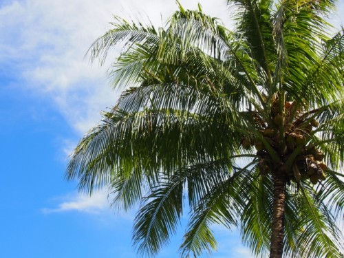 ココナッツオイルにはビタミンEが豊富