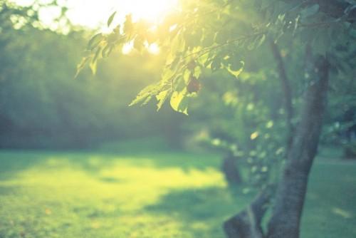 オーガニック製品に使われている植物の効果