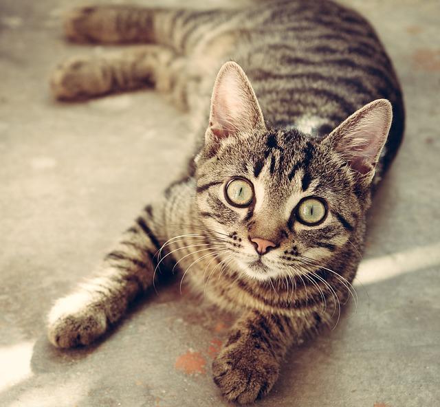 アニマルセラピーの中でも、高い治療効果をもつ「猫」