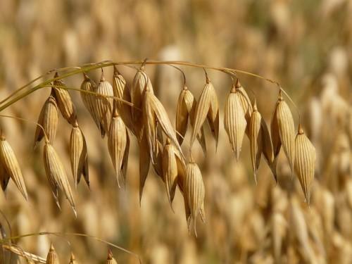 ミスカルは穀物を粉状にした韓国の健康食