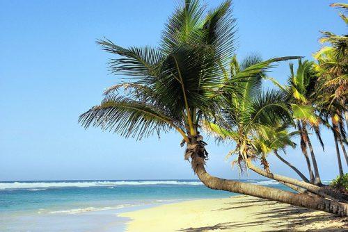 保湿効果で美肌を作るココナッツオイル