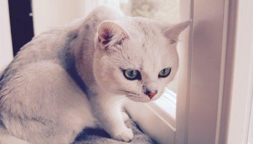 猫背を矯正してぽっこり下腹を解消!