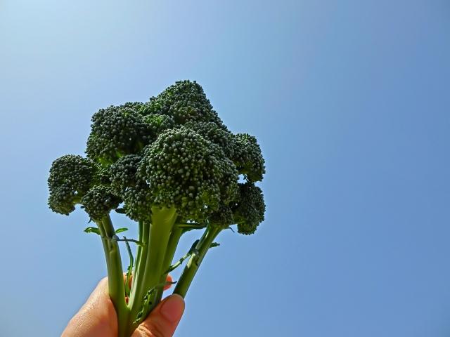 便秘を改善して痩せやすい身体を作るブロッコリー